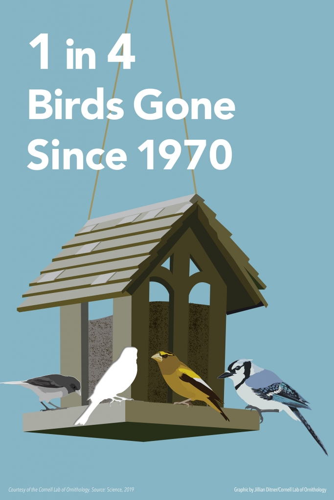 Graphic Courtesy of Cornell Lab of Ornithology